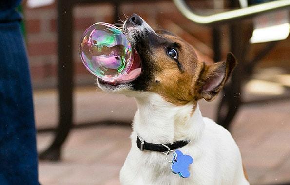 Amante de las Burbujas
