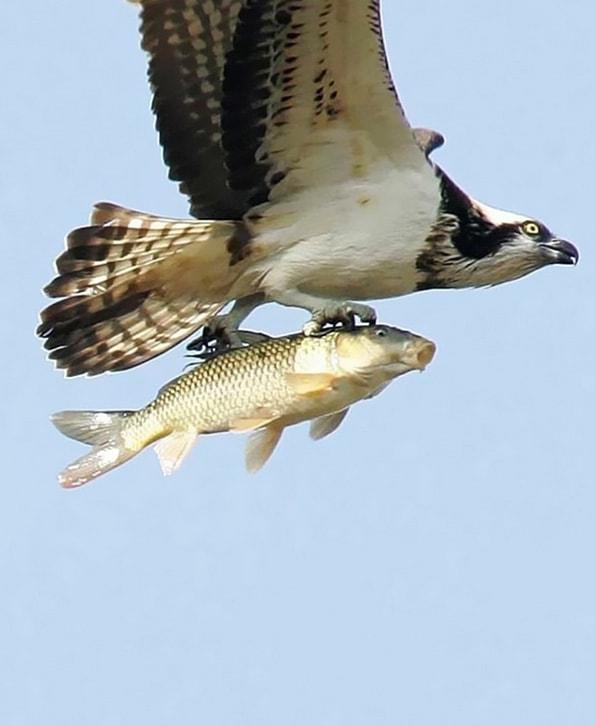 Pez Volador?